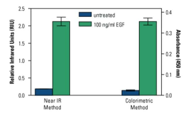 Both the near infrared and colorimetric detection formats for the EGFR In-Cell ELISA Kits show similar fold-induction in EGF stimulated A431. Z-factor (0.82 and 0.80, respectively) indicate comparable
