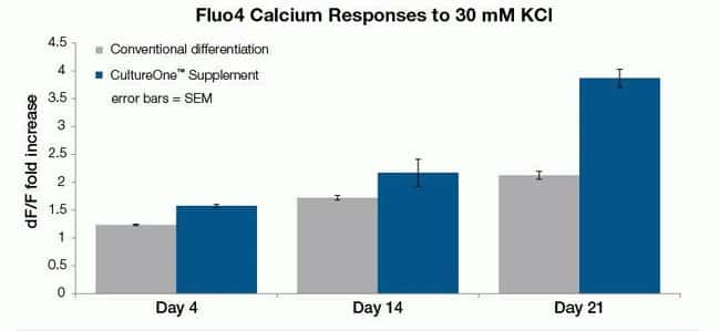 Treatment with CultureOne Supplement accelerates the maturation of neurons differentiated from hPSC-derived NSCs