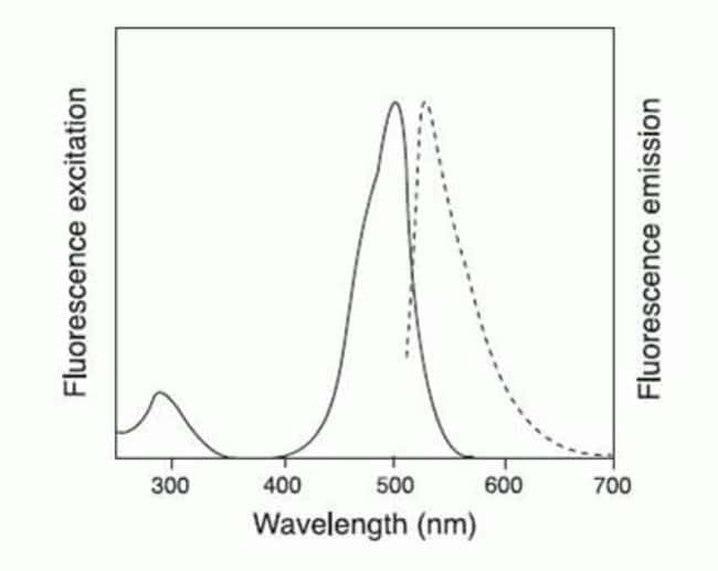 Fluorescence excitation and emission spectra of CellEvent Caspase-3/7