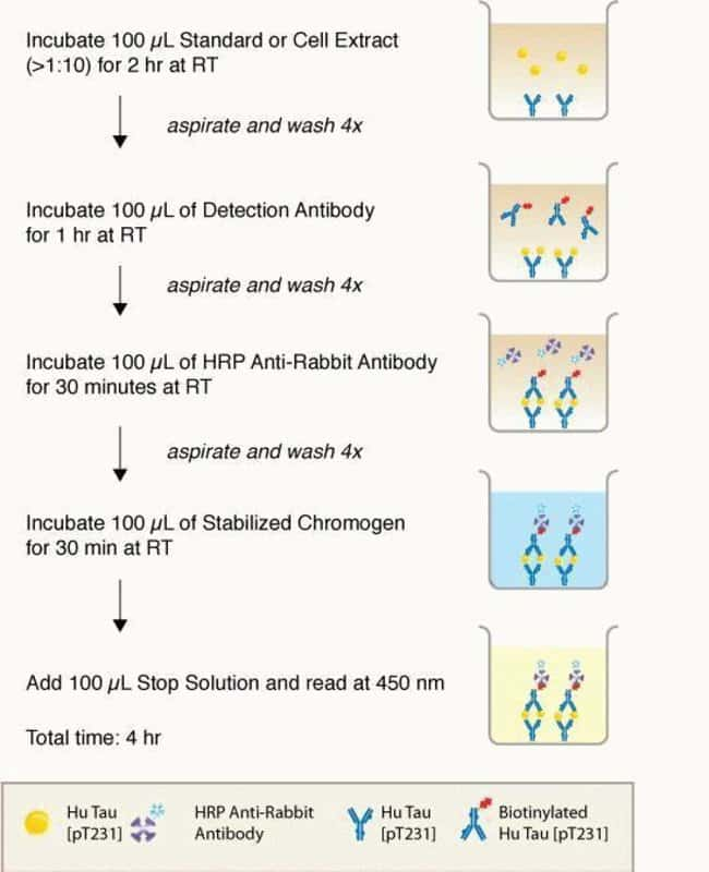 Figure 1. Assay protocol.