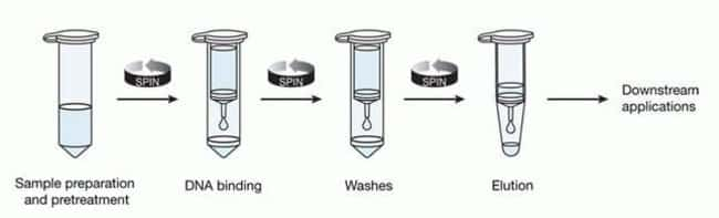 Easy-to-follow PureLink™ spin column–based purification method.