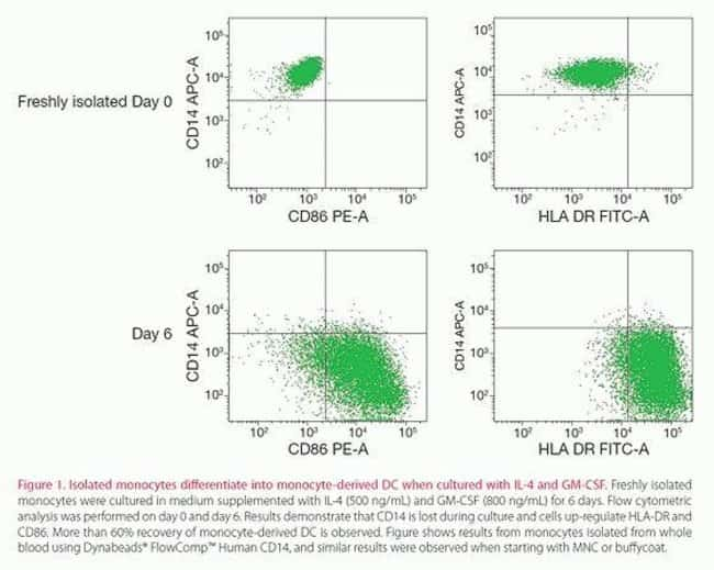 Isolated monocytes differentiate into monocyte-derived DC when cultured with IL-4 and GM-CSF.