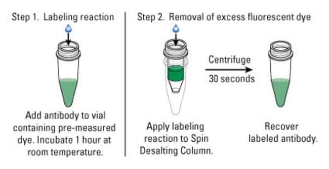 Procedure summary for DyLight 350 Antibody Labeling Kits