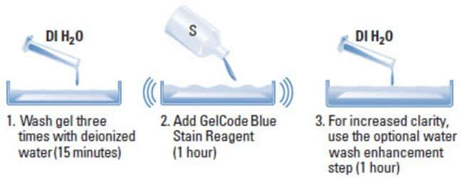 Protocol summary for the GelCode Blue Stain Reagent
