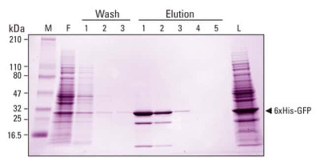 Cell lysate containing over-expressed recombinant 6xHis-tagged GFP was prepared in B-PER Bacterial Protein Extraction Reagent (Part No. 78243) and protease inhibitors. Protein concentrations were dete
