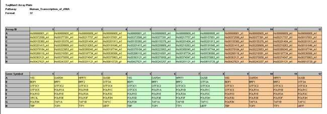 Array Plate: Human Transcription of rRNA