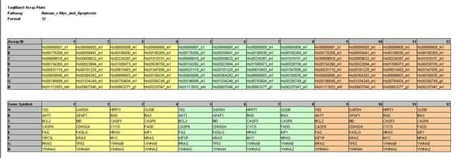 Array Plate: Human c-Myc and Apoptosis