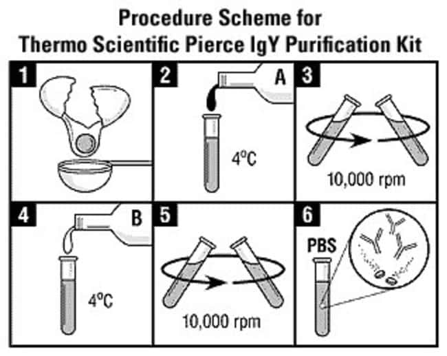Protocol summary for the IgY Purification Kit