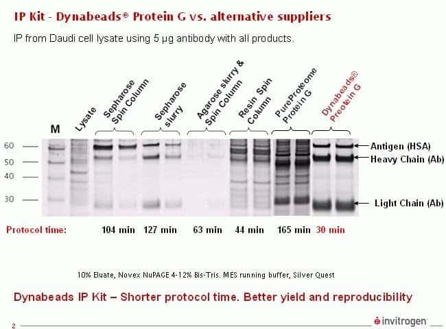 Comparison of results for all methods vs. Dynabeads® Protein G