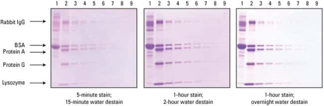 Enhanced sensitivity and crystal-clear background using Imperial Protein Stain