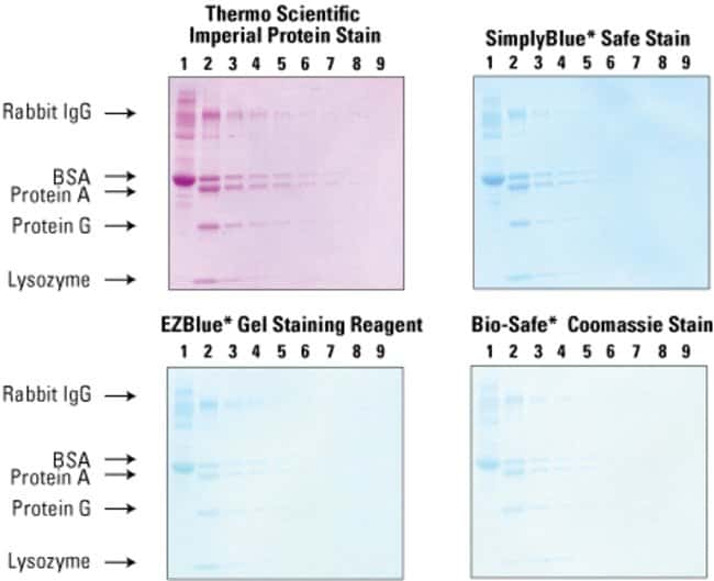 Imperial Protein Stain is fast and sensitive