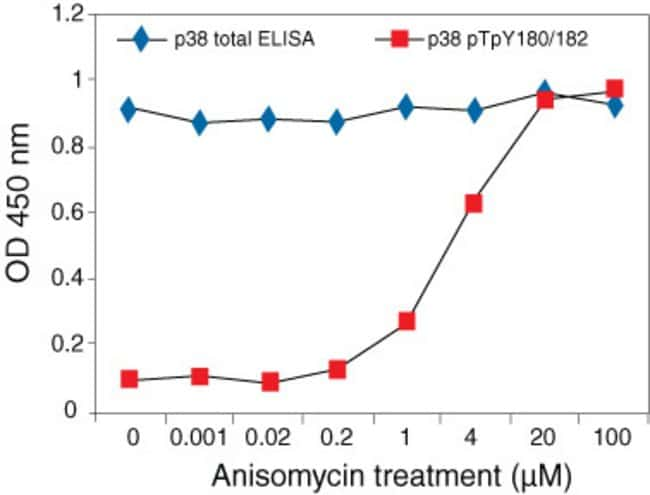 p38 MAPK [pTpY180/182] phosphoELISA™. Jurkat cells treated with various concentrations of anisomycin, were tested for p38 and phospho p38 by ELISA. Data show increasing levels of phospho p38 in respon