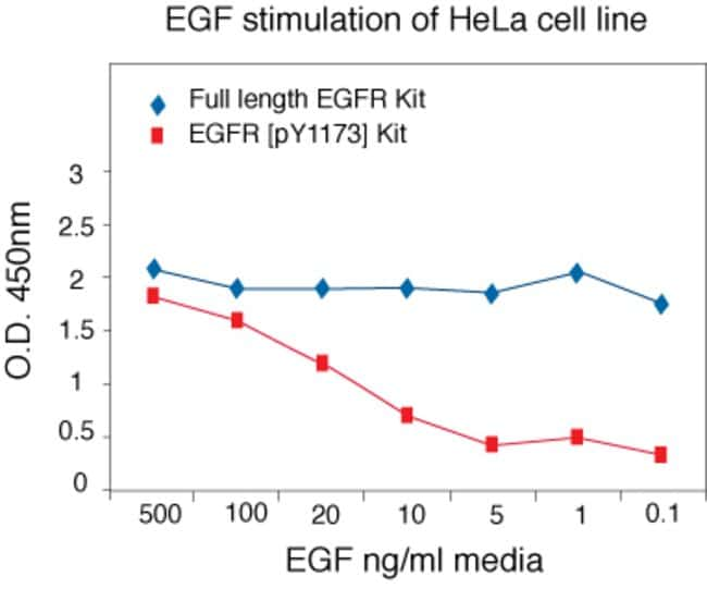 Human EGFR (full-length) ELISA. Data show specificity of EGFR (full-length) ELISA to measure membrane-bound EGFR protein in extracts of EGF-stimulated HeLa cells, independent of phosphorylaion state.