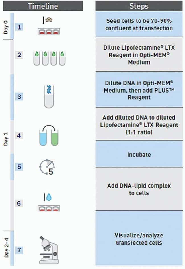 Lipofectamine® LTX Transfection Workflow