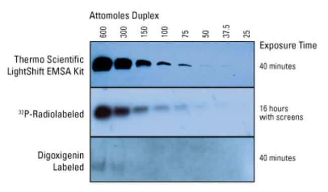 Comparison of the LightShift EMSA Kit to a popular digoxigenin-based EMSA kit and a radioactive method. Serial dilutions of a labeled DNA duplex were electrophoresed on a 6% polyacrylamide gel and det