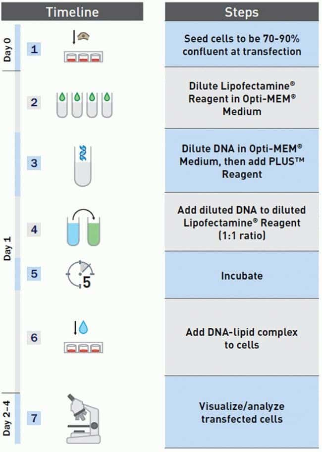 Lipofectamine® Workflow