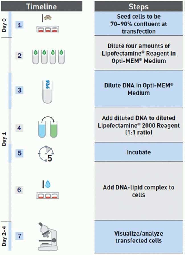 Lipofectamine® 2000 transfection protocol