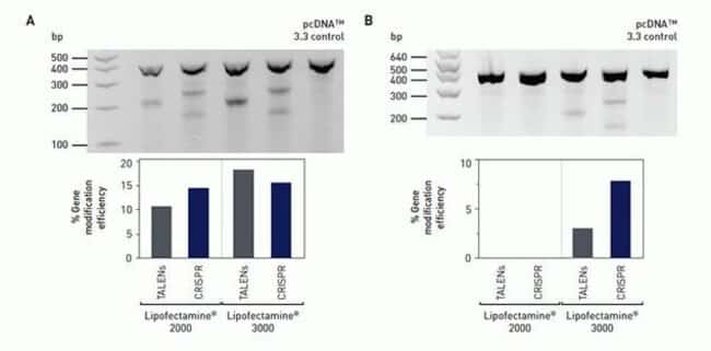 The TALENs and CRISPRs targeted the AAVS1 locus in U2OS (A) and HepG2 (B) cell lines. The vector contained an OFP reporter gene and was transfected with Lipofectamine® 3000 into U2OS and HepG2 cell li
