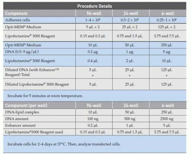Lipofectamine® 3000 transfection procedure details