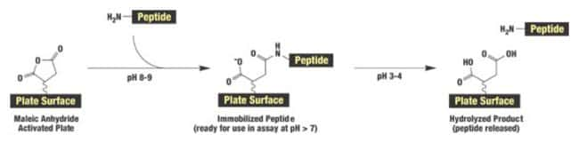 Reaction scheme for coupling peptides and other amine-containing molecules