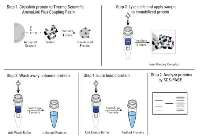 Protocol summary for the Micro Protein Coupling Kit