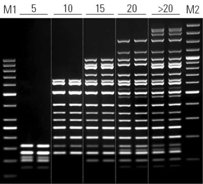 Highly multiplex PCR: simultaneous amplification of over 20 targets up to 2.5 kb
