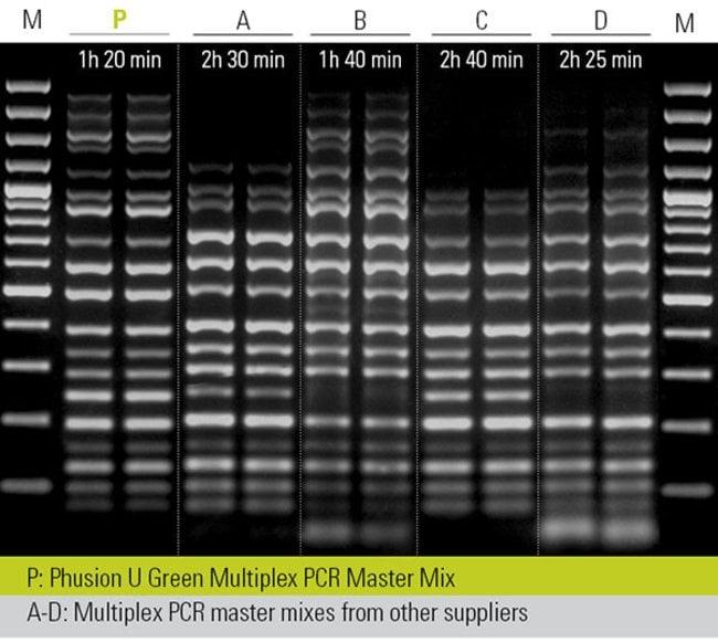 Efficient multiplex PCR in short reaction times