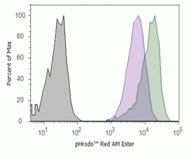 K562 cells incubated with pHrodo™ Red AM and clamped with intracellular pH calibration buffer