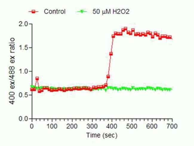 Detecting changes in cellular redox potential in HepG2 cells using Premo™ Cellular Redox Sensor