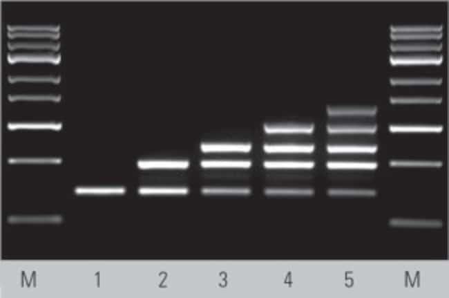 Multiplex direct PCR