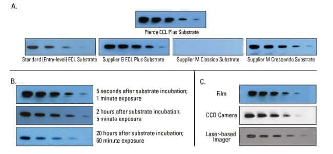 ECL Plus Substrate delivers high performance and a long-lasting signal using three methods of detection