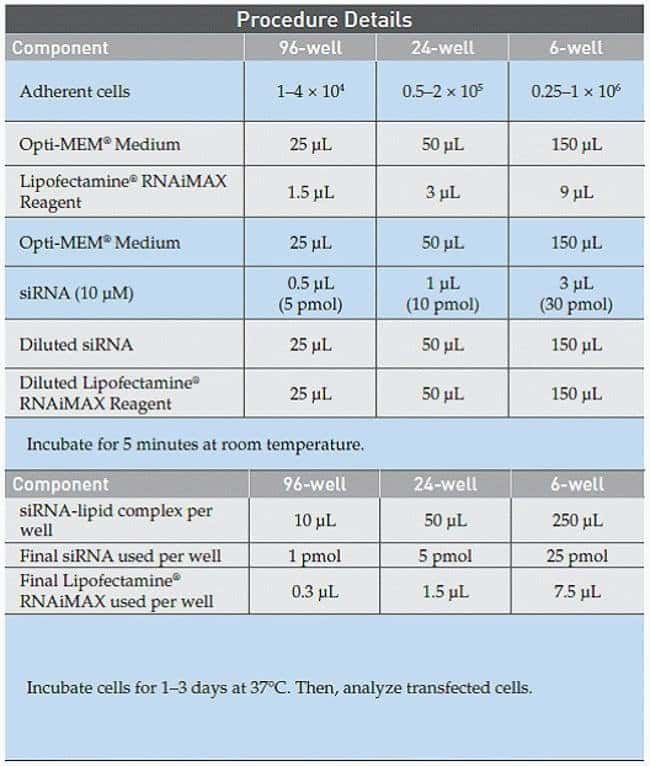 Lipofectamine® RNAiMAX Transfection Procedure