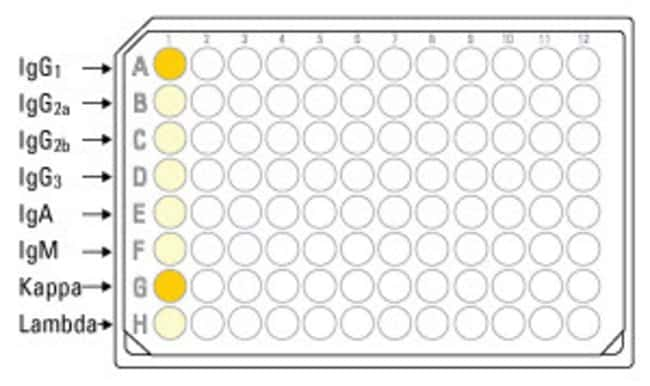 Wells A-H of each eight-well strip (microplate column) are pre-coated with eight different class- or subclass-specific capture antibodies. A sample is tested by adding 50µL of sample to all eight wells of a strip. For partial-plate assays with less than 12 samples, individual 8-well strips can be removed from the microplate frame for later use. In this example, the results indicate that the antibody tested in strip #1 is a mouse IgG1 with kappa light chains.