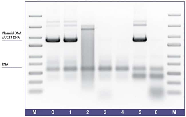 Complete removal of DNase I