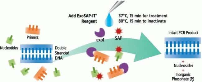 Fig. 1, Summary of ExoSAP-IT PCR Product Treatment