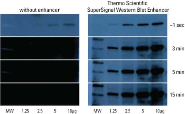 SuperSignal Western Blot Enhancer reduces background to enable detection of low-abundance targets