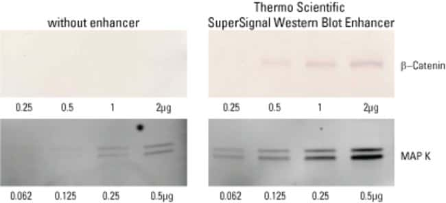 SuperSignal Western Blot Enhancer is compatible with chromogenic and fluorescent detection methods