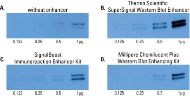 Comparison of SuperSignal Western Blot Enhancer with other commercially available enhancers