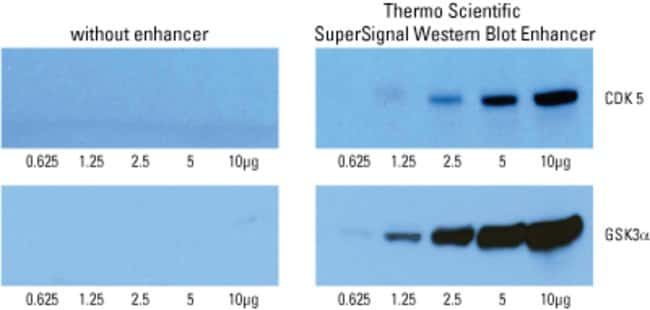 SuperSignal Western Blot Enhancer improves the lower detection limit for chemiluminescent substrates