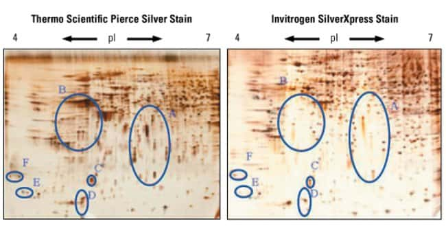 Comparison of identical 2D gels stained with Silver Stain Kit and another popular commercial silver stain formulation