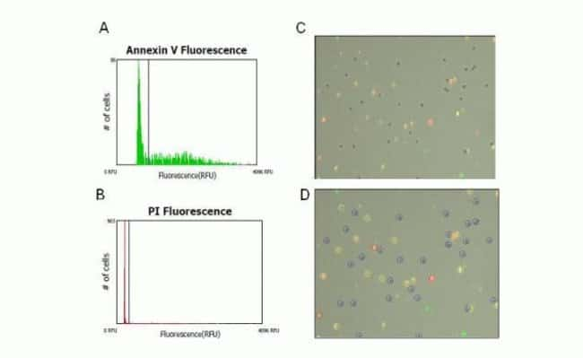 Visual confirmation of apoptosis using the Tali™ Image-Based Cytometer