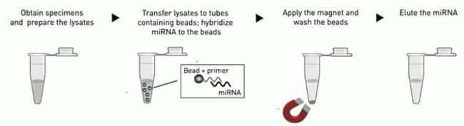 TaqMan® miRNA ABC Purification Kit Workflow