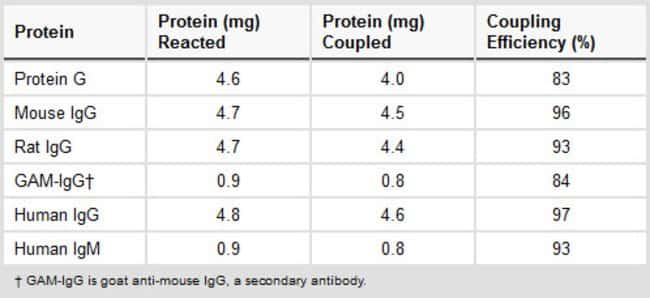 High yield protein coupling