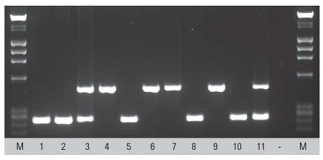 Genotyping F2 transgenic mice