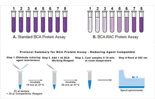 protein quantification Abcam's protein quantitation kit (bradford assay) provides a simple and rapid procedure for determining the concentration of protein in solution the method utilizes an improved coomassie blue g reagent which forms a blue complex in the presence of protein the intensity of the blue complex is.