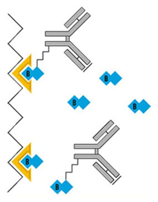 Biotin binding and elution with Monomeric Avidin Agarose