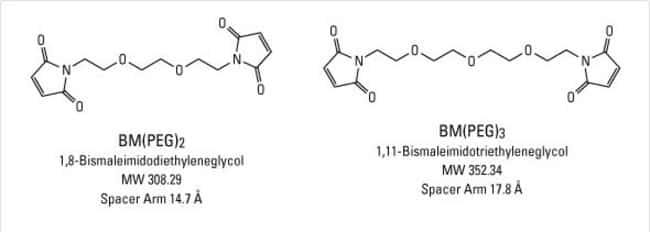 Chemical structures of BM(PEG)2 and BM(PEG)3 crosslinking reagents