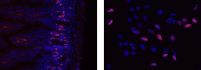 Data for BrdU Kit for IHC/ICC Immunofluorescence eFluor™ 615