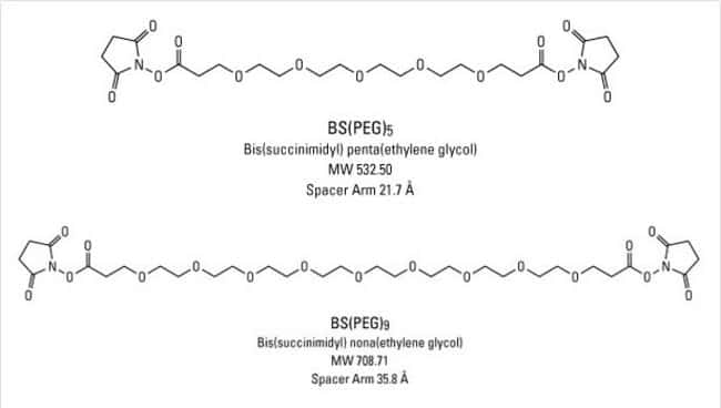 Chemical structures of BS(PEG)5 and BS(PEG)9 crosslinking reagents, Cat. No. 21581 and 21582, respectively.