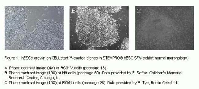 hESCs grown on CELLstart™-coated dishes in STEMPRO® hESC SFM exhibit normal morphology.